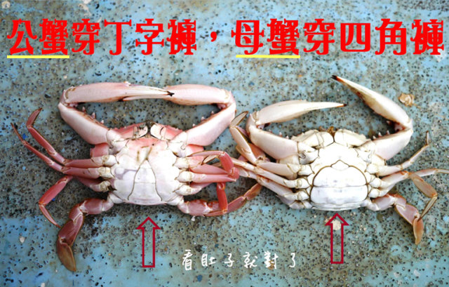 ptts_crabs