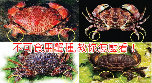 ptts_crabs12